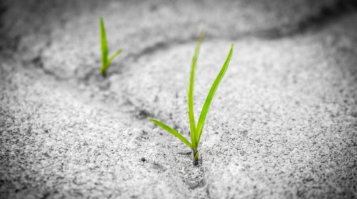 Crescere la chiesa